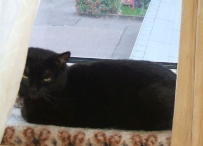 Blacky am Fenster
