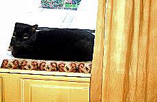 Blacky auf der Fensterbank