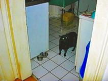 Blacky in der Küche
