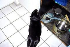 Blacky wünscht sich den Futterschrank offen