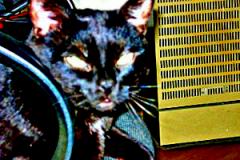 Blacky auf dem Bürostuhl