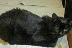 Blacky nach Tierarztbesuch im Bett