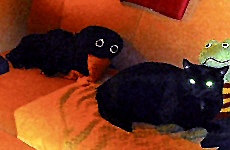 Blacky und die Krähe